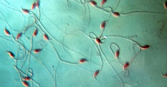 Mouse sperm sent into space produces healthy IVF babies