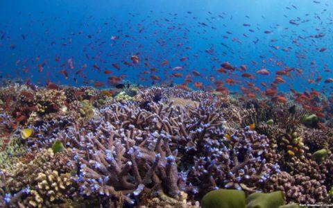 In Vitro Fertilization Could Help Restore Vulnerable Coral Reefs