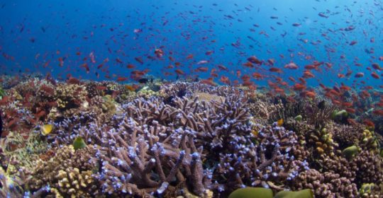 In Vitro Fertilization Could Help Restore Vulnerable Coral Reefs