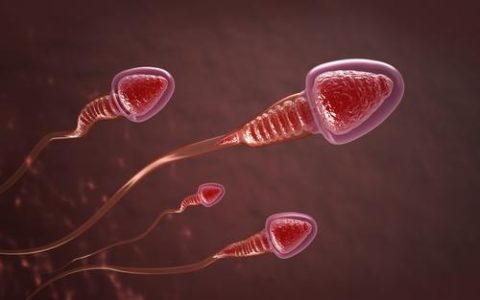 What Causes Male Infertility? Sperm Cells With Poorly Packaged Genes, Researchers Say