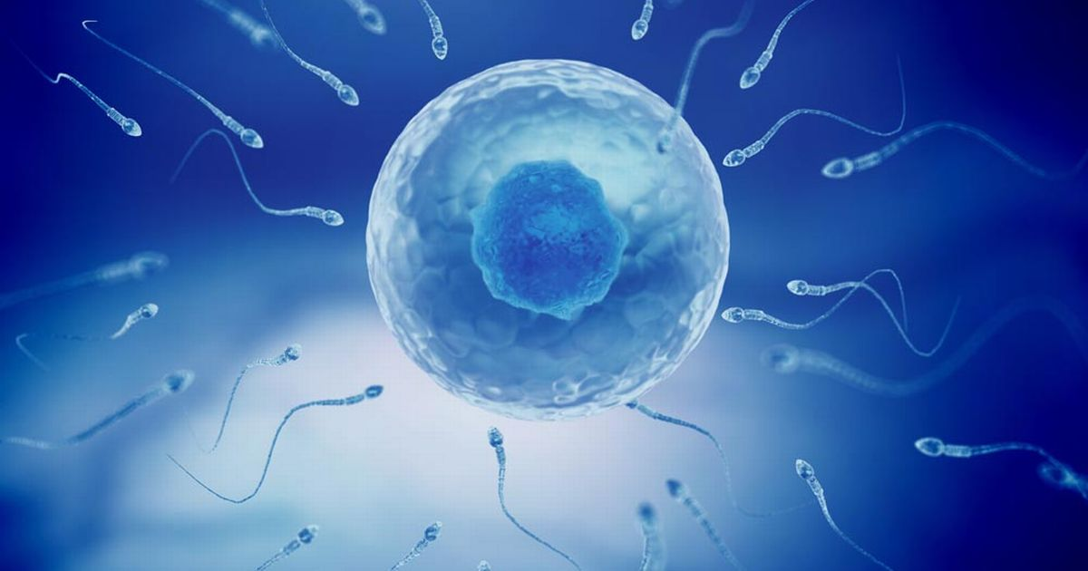 sperm and egg Read and learn for free about the following article: egg meets sperm.