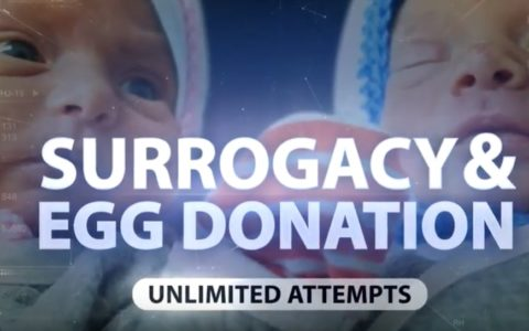 Infertility treatment step by step: surrogacy and egg donation, Biotexcom